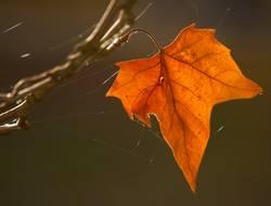 Herbstinspiration