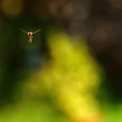 Ballerina im Flug