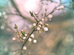 ein bißchen Frühling verbreite