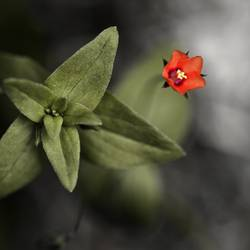 kleine Rote *90*