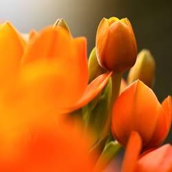 Blumenname unbekannt