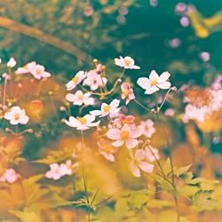 viele Blumen blühen