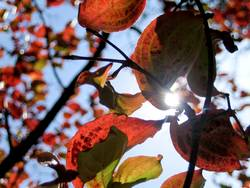 Sonnenblatt 2