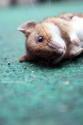 aus die Maus