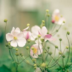 Blumengalaxie