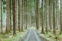 A long way home through a springtime forest