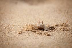 Crab on the Beach ll
