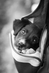 Adorable little Puppy in a Bag