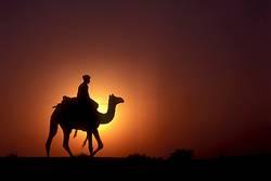 Camel Rider at Sunset