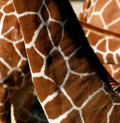 Suchbild (Welche Tiere verstecken sich in diesem Bild?)