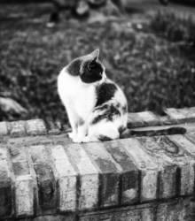 Straßen-Katze