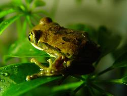 Sei kein Frosch