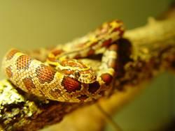 Schlange auf Ast
