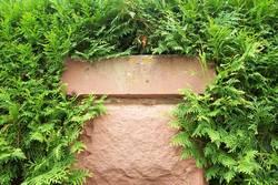 Pflanzenmauer