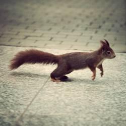 PC mag immernoch Eichhörnchen