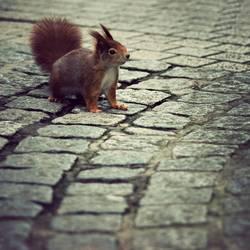 PC mag doch Eichhörnchen