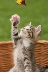 verspieltes Katzenbaby