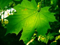 Grün in Grün