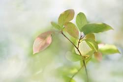 zartrosahellgrün