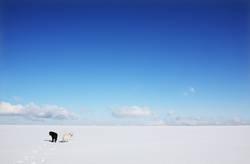 """Polarfüchse"""