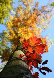Herbstfeuer I