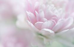 soft flower *350*