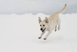mein glücklicher Hund :-))