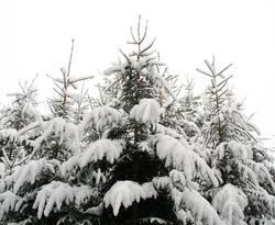 Winterwipfel