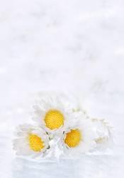 ein Haufen Blumen