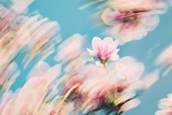 Frühlingsbrise
