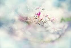 ich träum vom Frühling