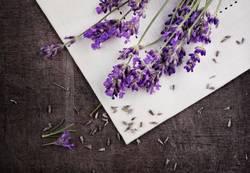 Lavendel rustikal