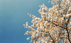 Blütenzauber I