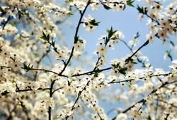 Blütennetz