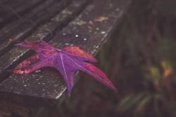 Und noch ein Herbstblatt