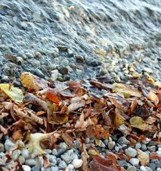 Ufer im Herbst