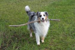 Wanna stick with me?