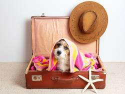 Hund in einem Reisekoffer