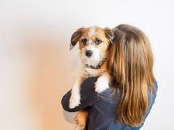Hund Auf dem Arm einer jungen Frau