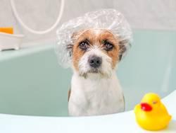 Hund, Haustier, Tier, Badewanne