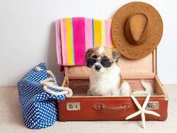 Hund mit Sonnenbrille in einem Reisekoffer