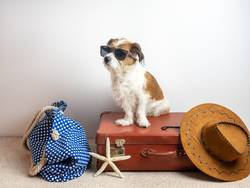Hund auf einem Reisekoffer