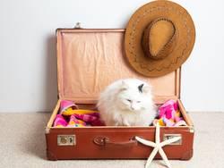 Katze in einem Reisekoffer