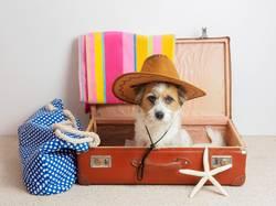 Hund mit Sonnenhut in einem Koffer