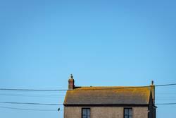Schwarzer Vogel mit Haus
