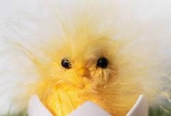 Nicht schon wieder Ostern