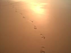 Spuren im Sand2