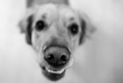 an angry dog says goodbye