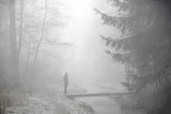 foggy woods #3