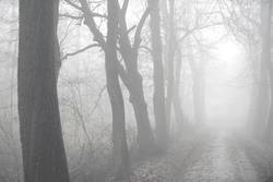foggy woods #6